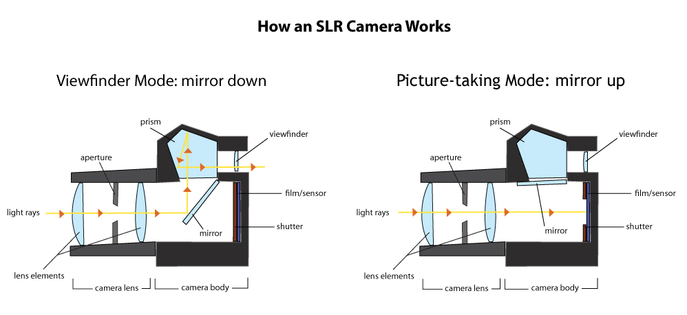 How an SLR Camera works